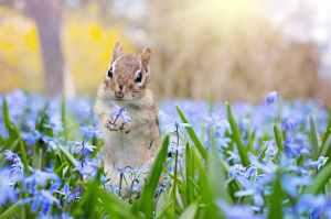 adorable animal bloom blossom